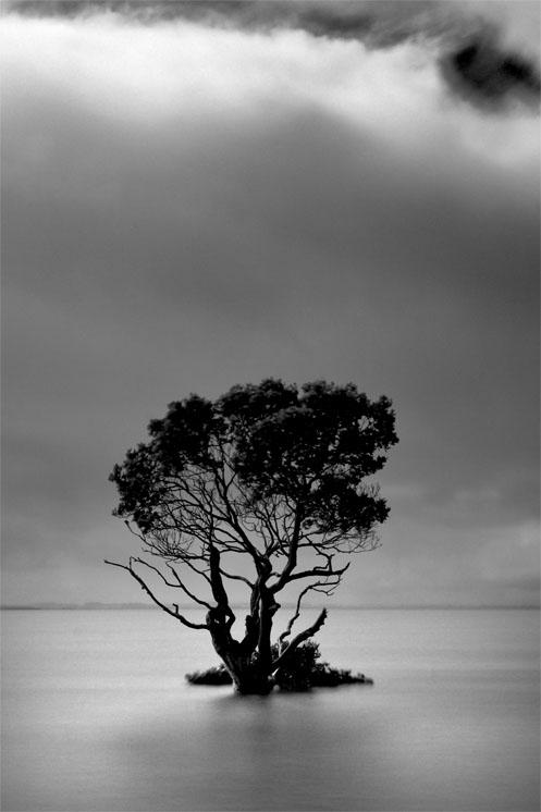 Mangrove tree, Westernport Bay, Jim Worrall