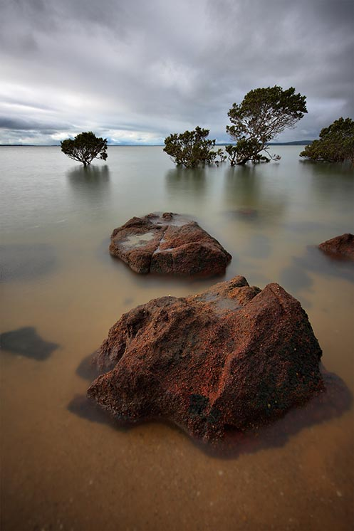 Mangrove tree, Westernport Bay, Jim Worrall