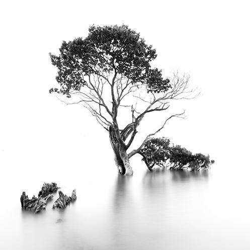 Sweet Survivor - Jim Worrall - Tenby Point - Westernport Bay - Australia