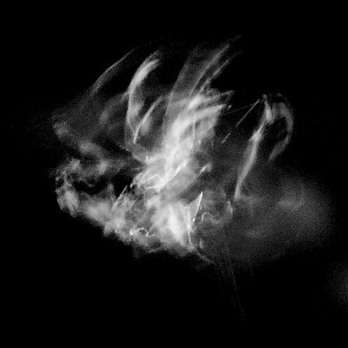 orb4 - Orb-weaver spider movement - Jim Worrall