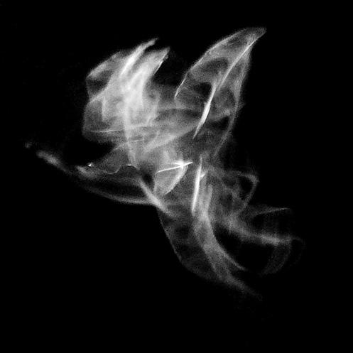 orb5 - Orb-weaver spider movement - Jim Worrall