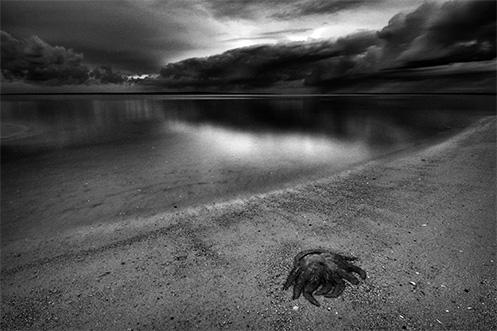 Mortality - Jim Worrall - Grantville - jellyfish