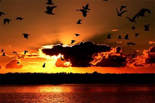 The Journey Home - Jim Worrall - Tooradin - Australia