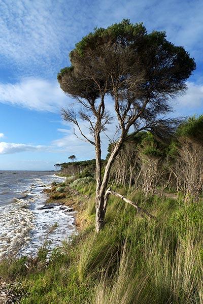 Grantville beach at high tide - Jim Worrall - Westernport Bay