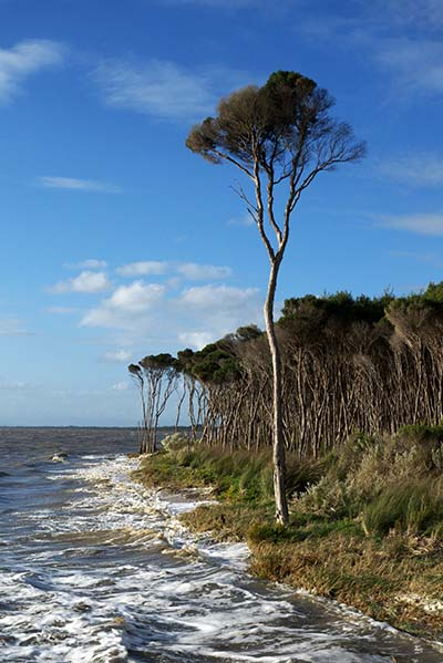 Grantville beach at high tide - Jim Worrall - Westernport Bay