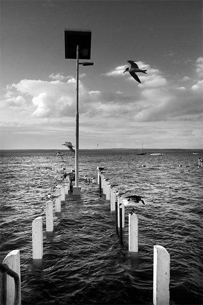 The Living Jetty - Jim Worrall - Corinella - Australia