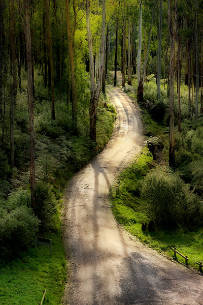 Road to the Noojee Trestle Bridge - Jim Worrall - Orton effect