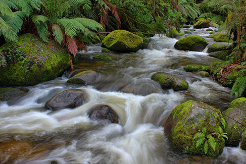 The Run of the Rain - Toorongo River - Jim Worrall - Noojee - Australia