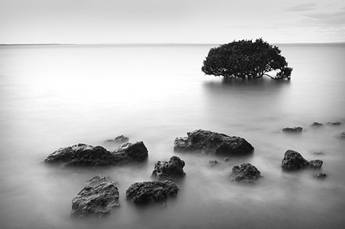 The Fossicker's Harvest - Tenby Point - Jim Worrall - mangrove - Australia