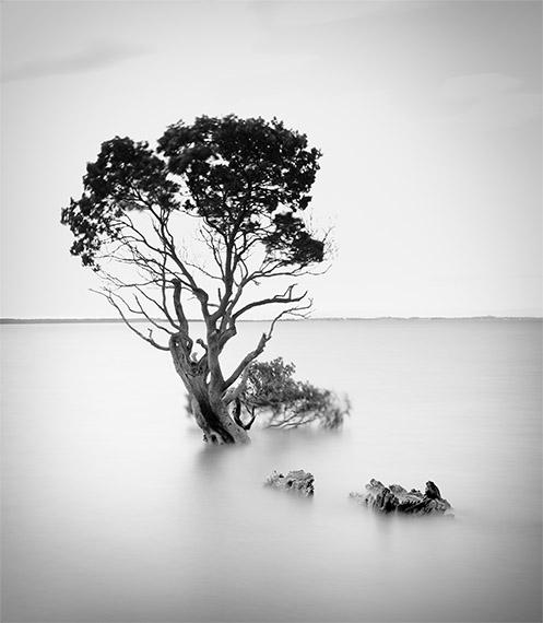Tenby Landmark - Tenby Point - Jim Worrall - mangrove - Australia