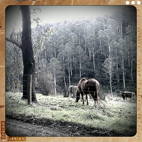 Along the Toorongo Valley Road - Jim Worrall - Noojee