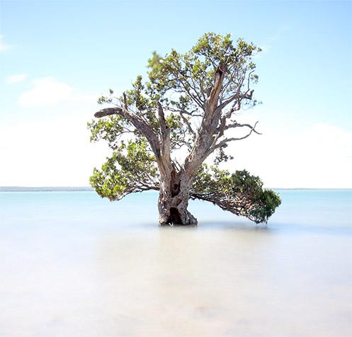 Old Man of the Sea - Corinella - Western Port Bay - Jim Worrall - mangrove