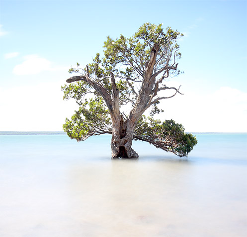 Old Man of the Sea - Corinella - Western Port Bay - Jim Worrall - mangrove