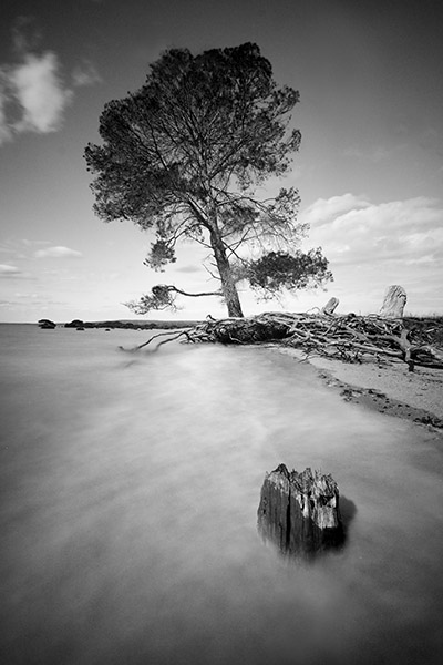 Queensferry - Western Port Bay - Jim Worrall - pine tree - high tide