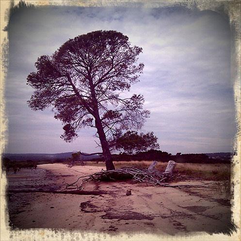 Queensferry - Western Port Bay - low tide - Jim Worrall