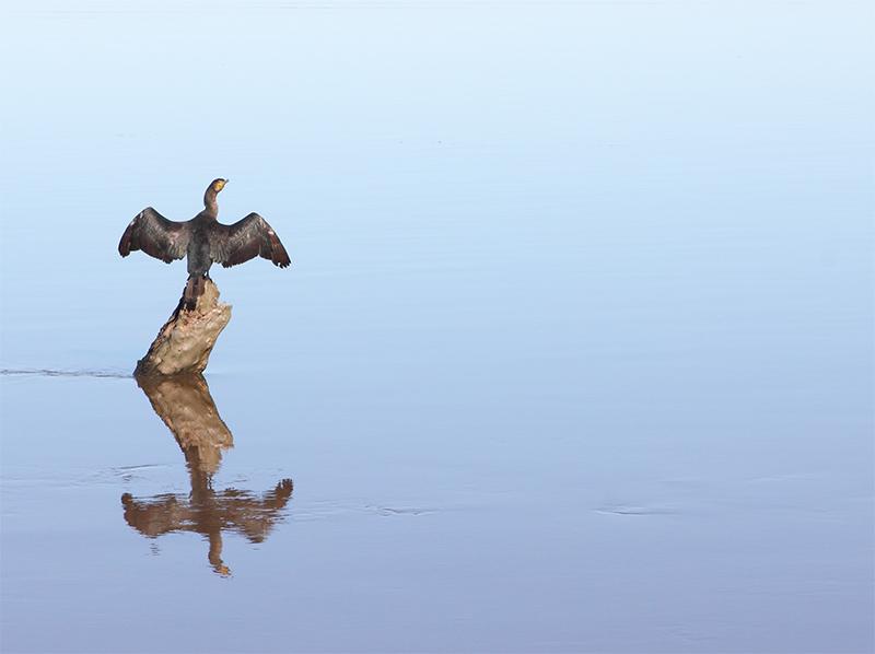 Metung - Lake King - Cormorant - Jim Worrall