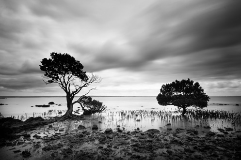 Tenby Point - mangroves - Jim Worrall - Western Port Bay - ND400 - long exposure
