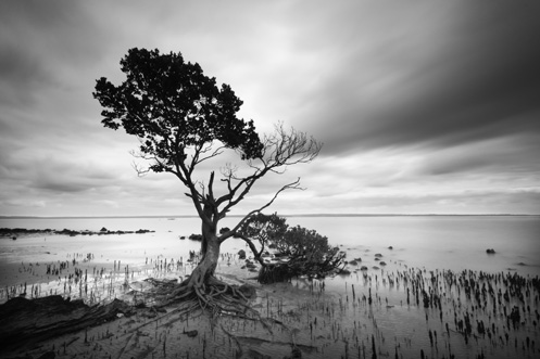 Tenby Point - mangrove -Jim Worrall - Western Port Bay - ND400 - long exposure