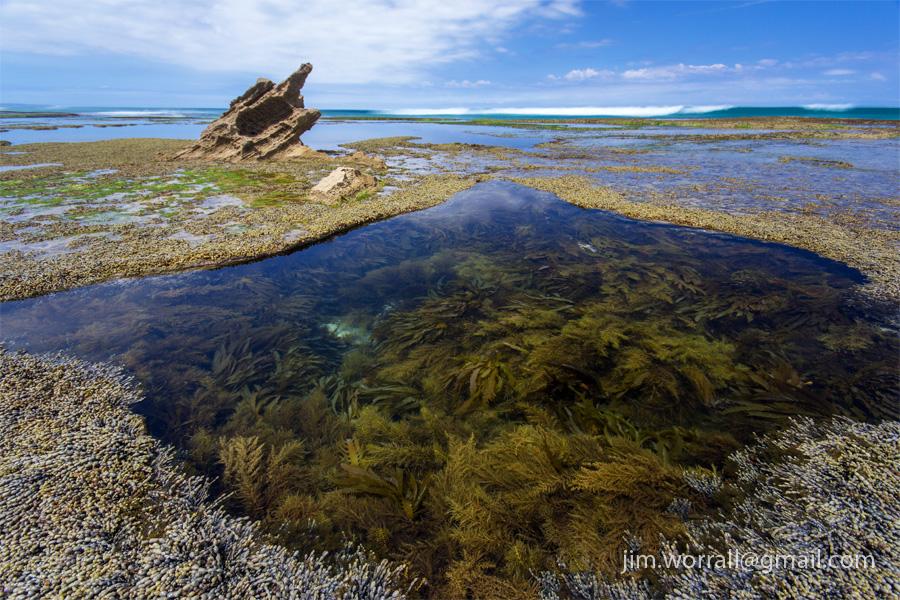 Sorrento rock pools - Jim Worrall - Mornington Peninsula - Australia