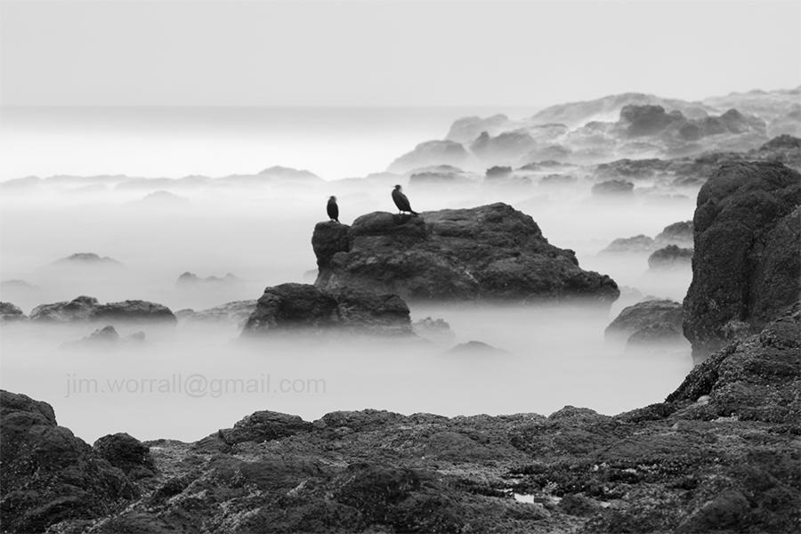 Flinders cormorants - Mornington Peninsula - Jim Worrall - Australia