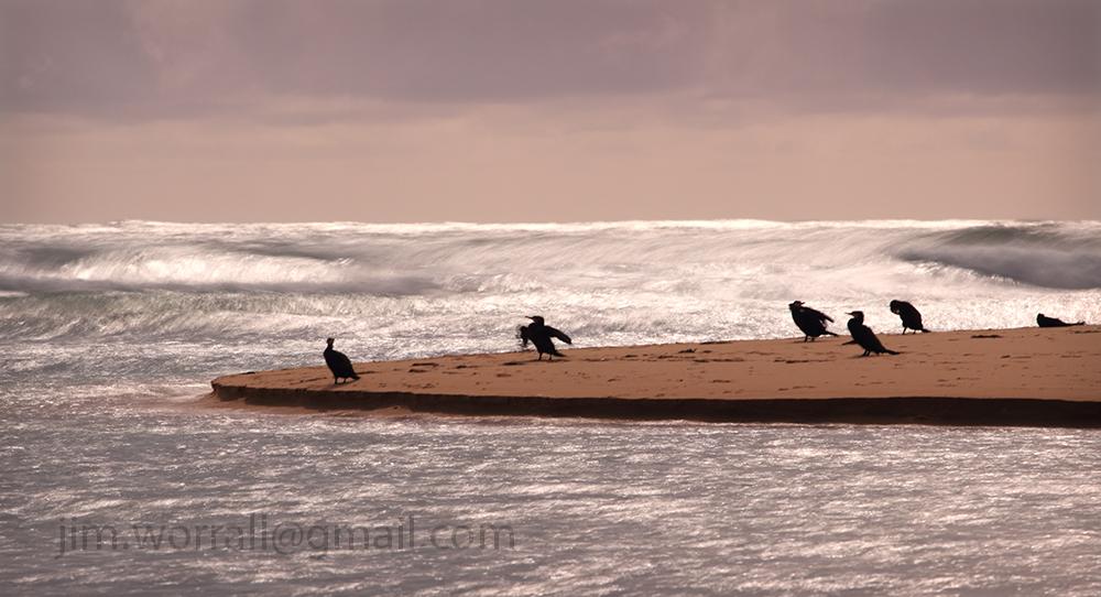 Powlett River Jim Worrall Cormorants Sea Birds