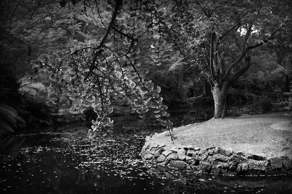 Alfred Nicholas Gardens - Jim Worrall - Sherbrooke - Dandenong Ranges