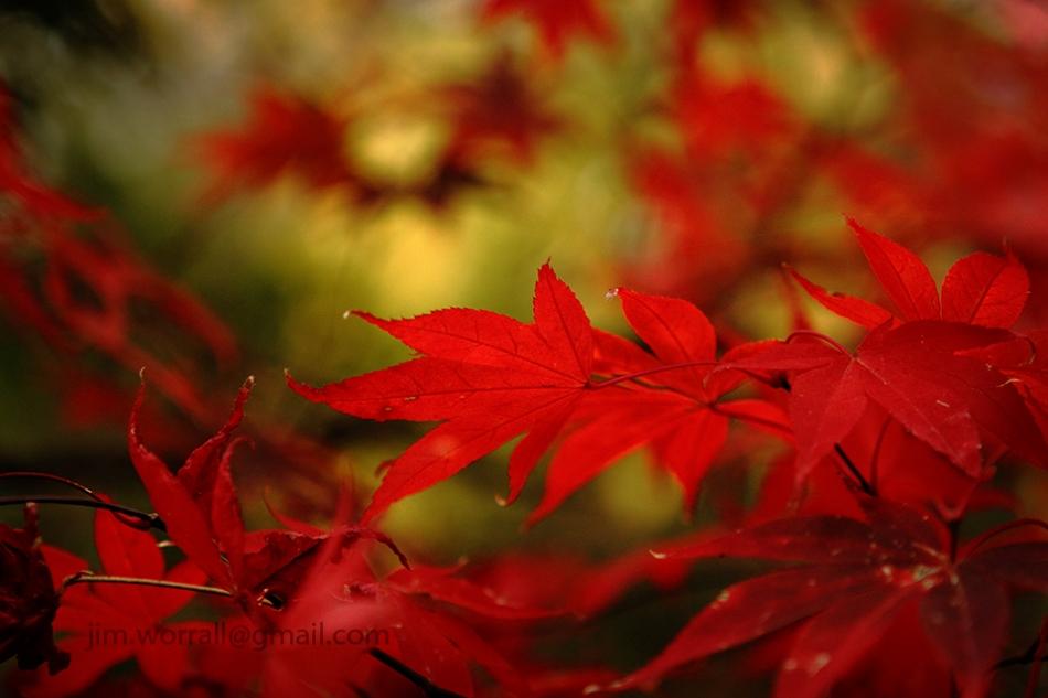 Alfred Nicholas Gardens, Jim Worrall, Sherbrooke, Dandenong Ranges