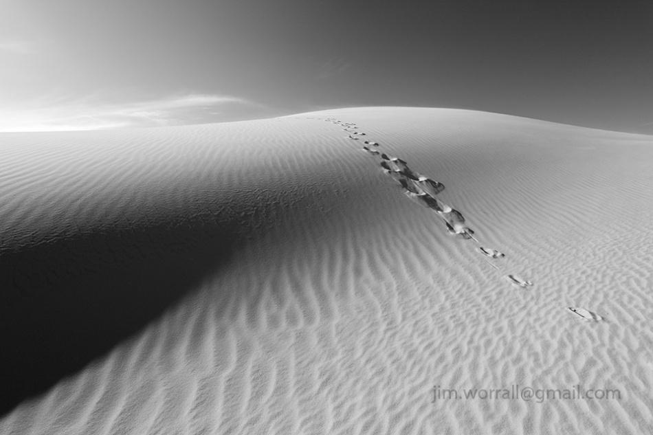 Jim Worrall kangaroo paw prints sand dunes desert