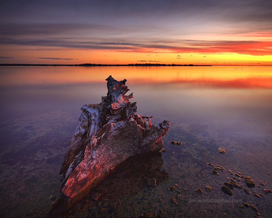 Metung, sunset, tree, remnants, log, shoreline, beach